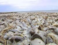 В Акмолинской области гибнет рыба