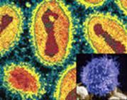 модифицированный вирус оспы