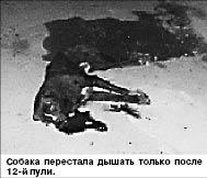Огромный пес едва не погубил молодую женщину, а его хозяева отделались штрафом в 15 тысяч тенге