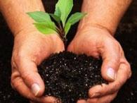К основным жизненным формам растений