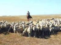 Казахстанские фермеры теперь будут платить налог на навоз