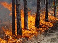В Северном Казахстане сгорело 23,7 га леса