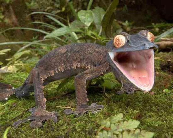 10 животных с невероятными глазами (фото)