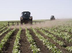 84. По данным областного департамента сельского хозяйства, в текущем году под посевы сладкого корнеплода в регионе...