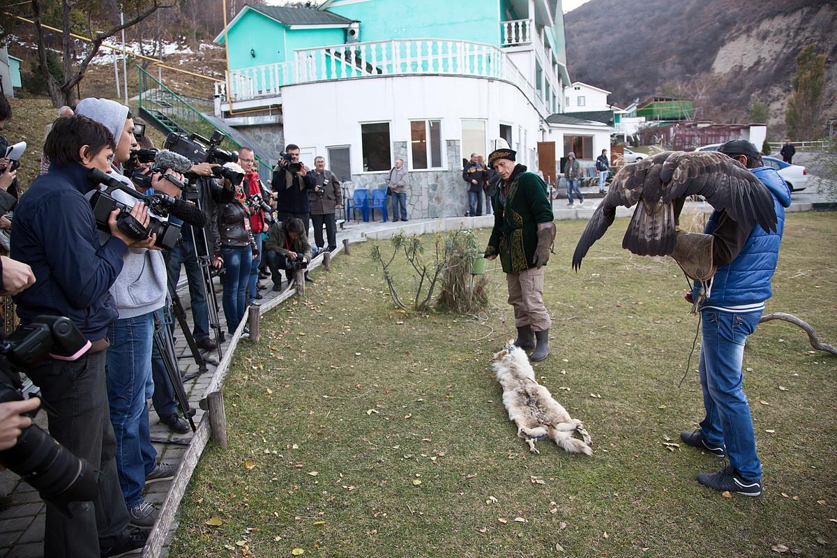 В Казахстане впервые проведена научная экспедиция по установлению точной численности беркутов