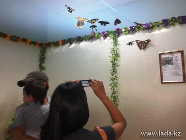 В Актау открылась выставка экзотических бабочек (фото)