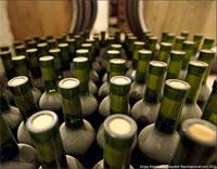 Есть ли будущее у казахстанского вина? Фото с сайта aquatek-filips.livejournal.com