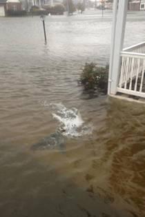 Именно это фото вызвало бурную дискуссию о реальности акулы на улицах затопленного города (фото: facebook.com/KevinPMcCarty)