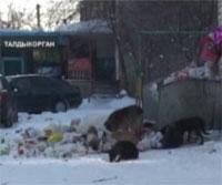 В Алматинской области бродячие животные покусали 7 000 человек