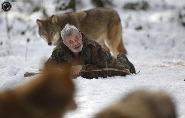 Изучая волков