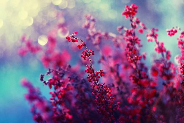 0 ae3da  Цветы Барбары Флорчик