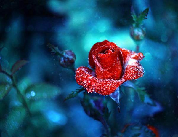 0 ae3d4  Цветы Барбары Флорчик
