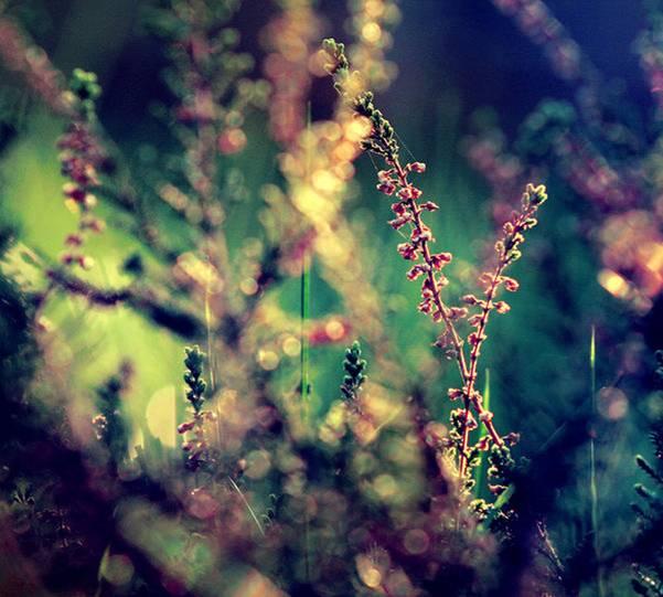 0 ae3cd  Цветы Барбары Флорчик