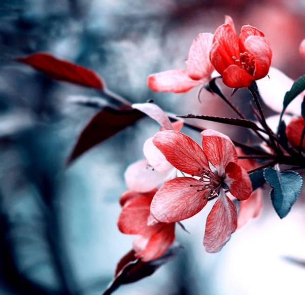 0 ae3cb  Цветы Барбары Флорчик