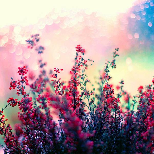 0 ae3c8  Цветы Барбары Флорчик