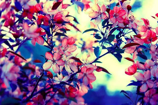 0 ae3c4  Цветы Барбары Флорчик