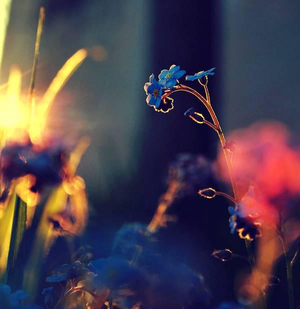 0 ae3c0  Цветы Барбары Флорчик