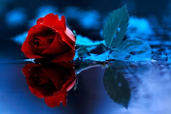 0 ae3bf  Цветы Барбары Флорчик