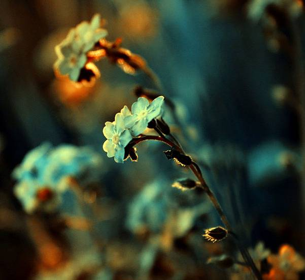 0 ae3be  Цветы Барбары Флорчик