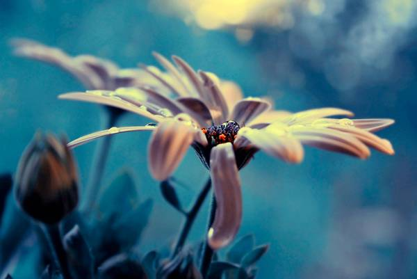 0 ae3bd  Цветы Барбары Флорчик