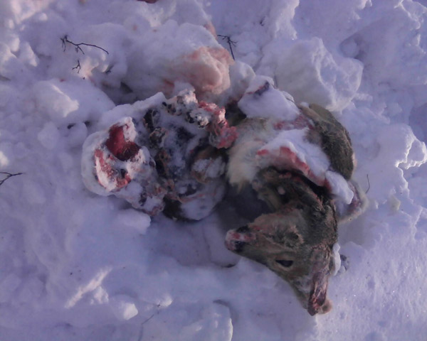 В Карагандинской области безработный задержан за браконьерство