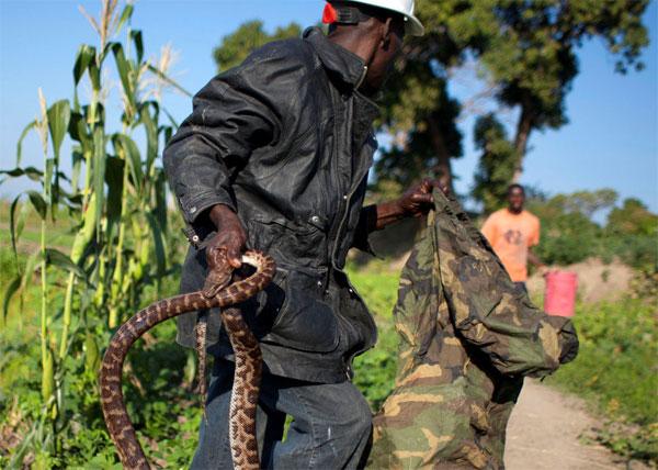 Рабочие будни заклинателя змей на Гаити