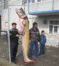 какой рыба можно выращивать в таджикистане заявку подключайтесь