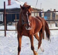В Акмолинской области никак не могут разобраться в деле о пропаже более 300 лошадей