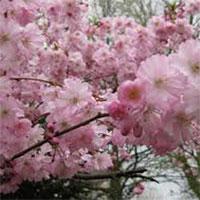 В Астане пройдет фестиваль искусств «Японская весна»