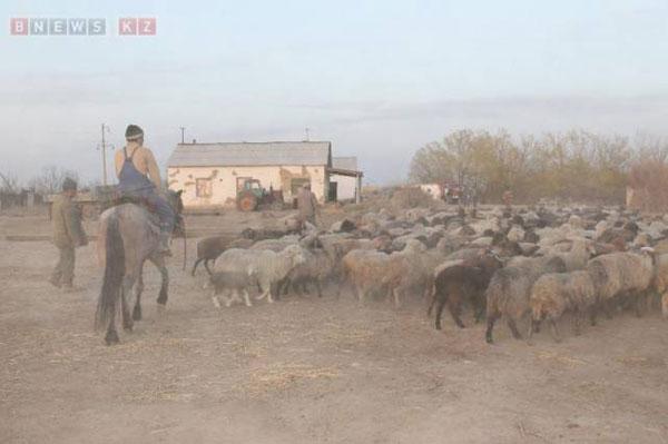 В Кызылординской области начался сезон пожаров на скотных дворах и пастбищах (фото)