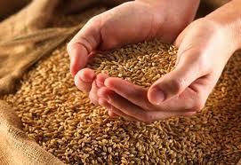 Минсельхоз РК намерен увеличить число плановых проверок по фактам недостачи зерна и внедрить электронные расписки