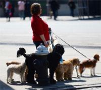 Город удивительных законов: в Петербурге придумали налог на собак и скидку за кастрацию