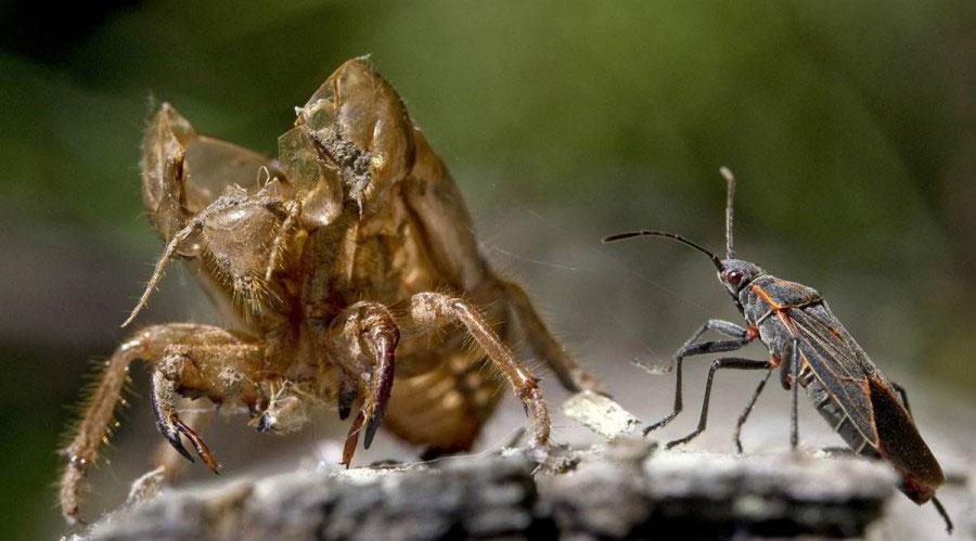 Возвращение цикад