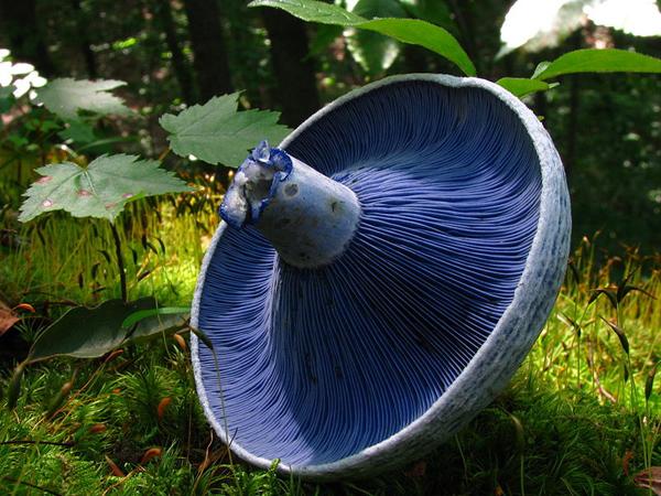 Самые красивые грибы в мире