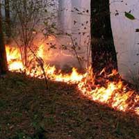 Более 110 га леса сгорело в Павлодарской области