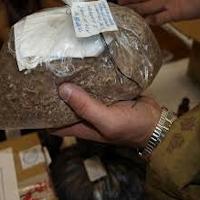 С начала года сотрудниками актюбинской транспортной полиции изъято около 20 кг наркотиков