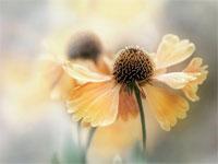 Удивительно нежные работы фотографа Мэнди Дишер