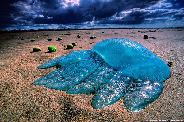 Медузы - инопланетные существа