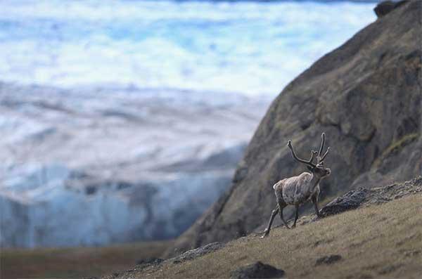 Гренландия: лаборатория глобального потепления