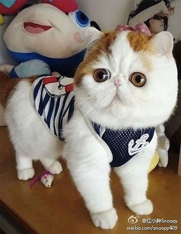 Кот Снупи-бейб и его гардероб
