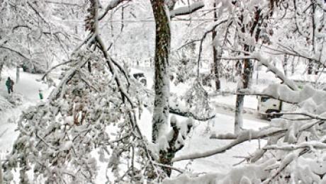 30 сантиметров снега выпало в Алматы в ночь на 30 марта