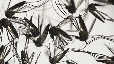 Еще несколько человек могут быть больны вирусом Зика— Роспотребнадзор