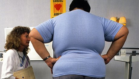 Лишний вес приводит краку— Ученые