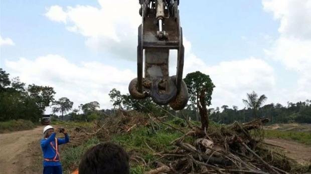 ВБразилии найдена огромная 10-метровая анаконда
