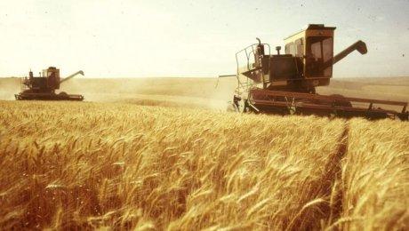 ВСеверо-Казахстанской области зерновые убраны практически наполовину площадей