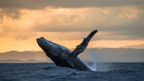 Ученые: наберегу Чили выбросились несколько китов