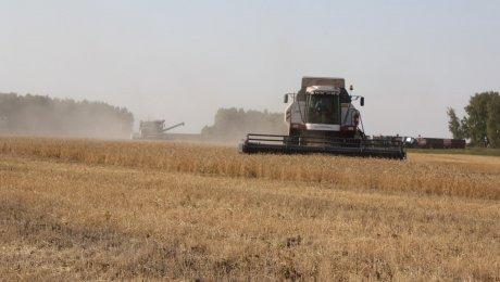 Казахстан собрал рекордный урожай зерна
