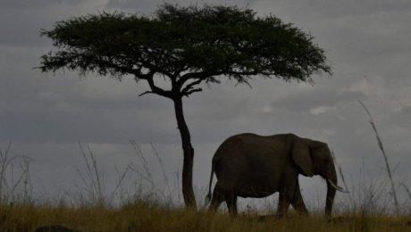 Специалисты: Количество позвоночных животных наЗемле уменьшилось на60%