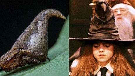 Новый вид паука получил название вчесть шляпы из«Гарри Поттера»