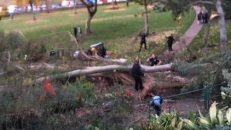 При падении дерева насвадьбе вСША умер человек